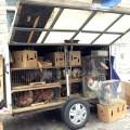 Arras le jour et des poules sur le marché