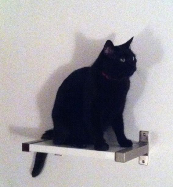 Un chat (noir).