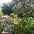 Un jardin de merveilles