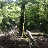 Des arbres sont tombés sous le coup des haches.