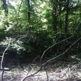 Dans le bois, les branches s'emmêlent.
