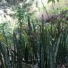 D'autres plantes encore.