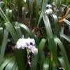 Et des orchidées sauvages.