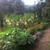 La plante qui endort et dont on meurt, le datura.